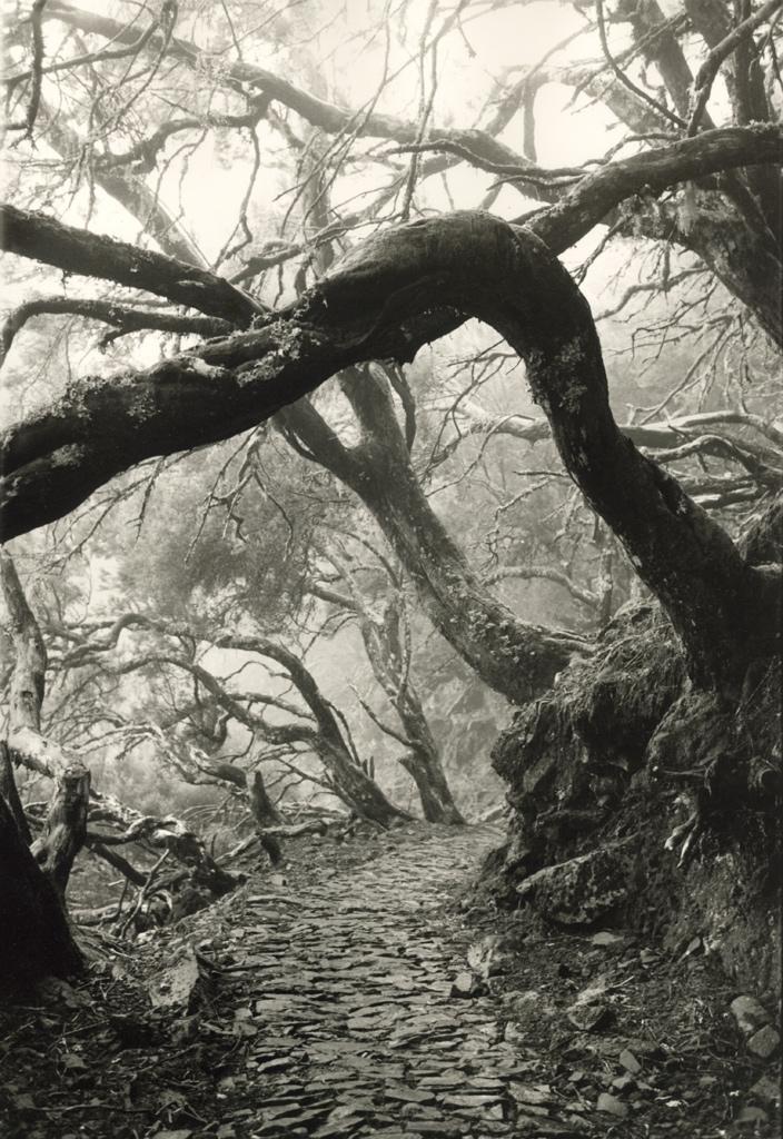 Foto eines Wanderwegs mit skurril gewachsenen Bäumen