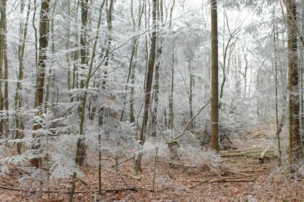 Foto eines reifbedeckter Waldweges