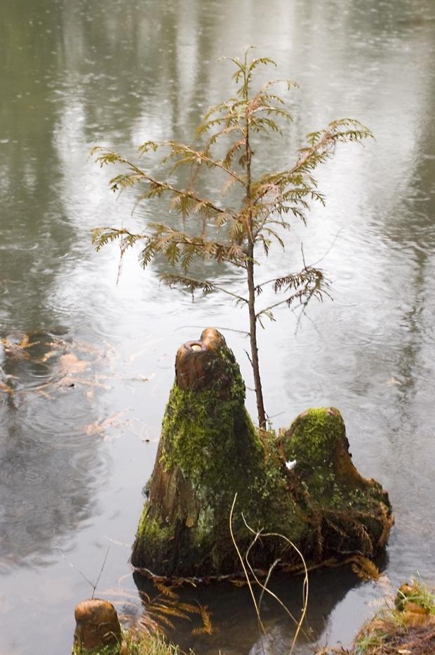 Foto: am Wasser
